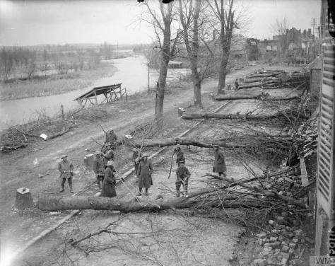 trees-felled-by-germans-in-retreat-to-hindenburg-line